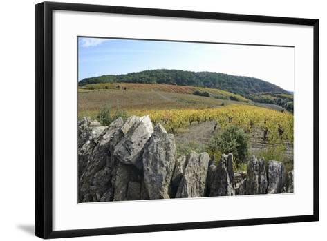 Vineyards with Fall Foliage, AOC Faugeres-Sami Sarkis-Framed Art Print