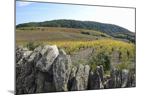 Vineyards with Fall Foliage, AOC Faugeres-Sami Sarkis-Mounted Photographic Print