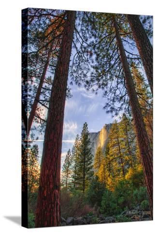 North View Through The Trees, Firefall, Horsetail Falls, Yosemite National Park-Vincent James-Stretched Canvas Print