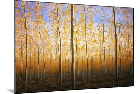 Mystery Trees in Autumn, Boardman Tree Farm, Oregon-Vincent James-Mounted Photographic Print