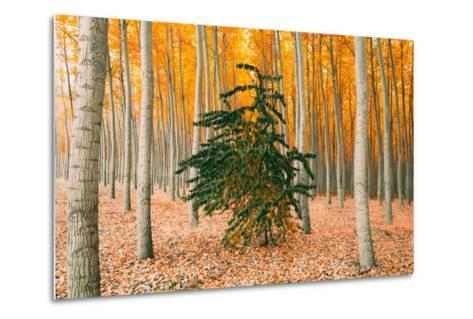 Do Your Own Thing, Northern Oregon Trees in Autumn-Vincent James-Metal Print