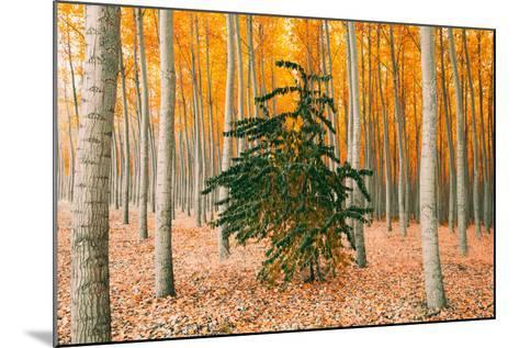 Do Your Own Thing, Northern Oregon Trees in Autumn-Vincent James-Mounted Photographic Print