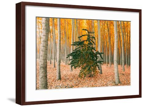 Do Your Own Thing, Northern Oregon Trees in Autumn-Vincent James-Framed Art Print