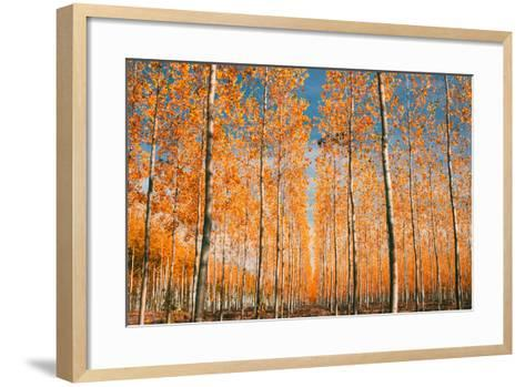 Trees of Mystery, Forest in Autumn, Northern Oregon-Vincent James-Framed Art Print