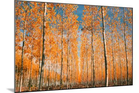 Trees of Mystery, Forest in Autumn, Northern Oregon-Vincent James-Mounted Photographic Print