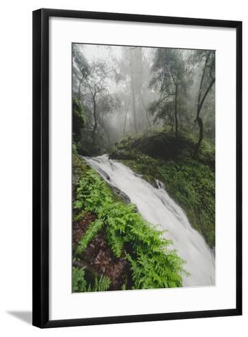 Winter Flow at Cataract Falls, Marin County Waterfall, Bay Area, California-Vincent James-Framed Art Print