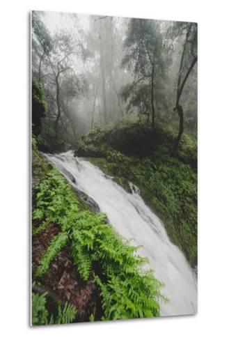 Winter Flow at Cataract Falls, Marin County Waterfall, Bay Area, California-Vincent James-Metal Print
