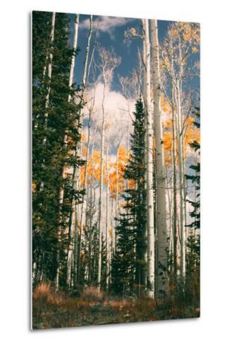 Autumn Trees at Dixie National Forest, Southern Utah, Southwest-Vincent James-Metal Print