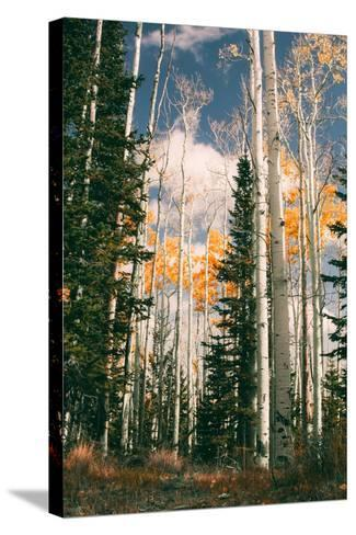 Autumn Trees at Dixie National Forest, Southern Utah, Southwest-Vincent James-Stretched Canvas Print