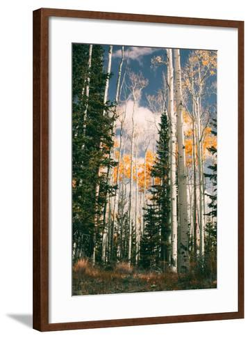 Autumn Trees at Dixie National Forest, Southern Utah, Southwest-Vincent James-Framed Art Print