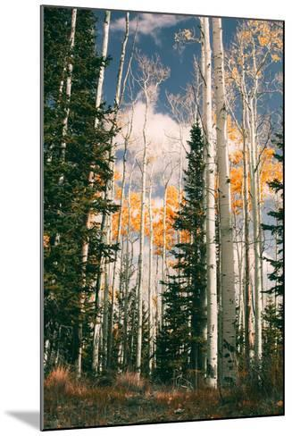 Autumn Trees at Dixie National Forest, Southern Utah, Southwest-Vincent James-Mounted Photographic Print