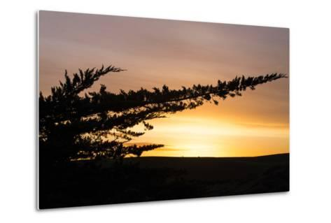 Magical Morning Sun and Silhouette, Dillon Beach, Marin County Bay Area-Vincent James-Metal Print