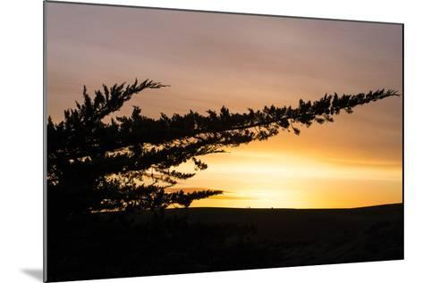 Magical Morning Sun and Silhouette, Dillon Beach, Marin County Bay Area-Vincent James-Mounted Photographic Print