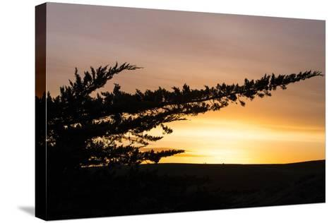Magical Morning Sun and Silhouette, Dillon Beach, Marin County Bay Area-Vincent James-Stretched Canvas Print