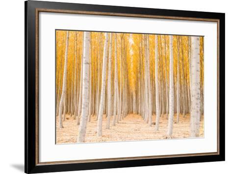 Autumn Tree World, Light Sun and Trees, Eastern Oregon-Vincent James-Framed Art Print