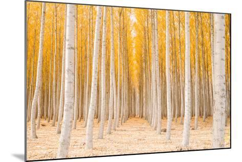 Autumn Tree World, Light Sun and Trees, Eastern Oregon-Vincent James-Mounted Photographic Print