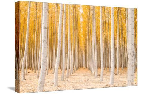 Autumn Tree World, Light Sun and Trees, Eastern Oregon-Vincent James-Stretched Canvas Print