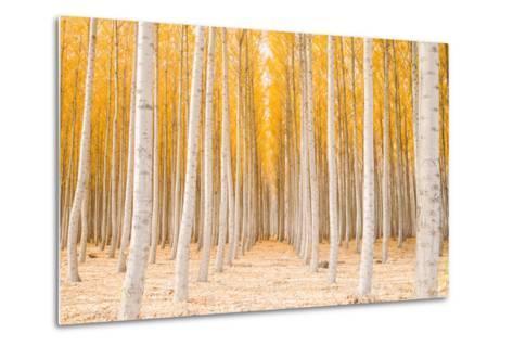 Autumn Tree World, Light Sun and Trees, Eastern Oregon-Vincent James-Metal Print