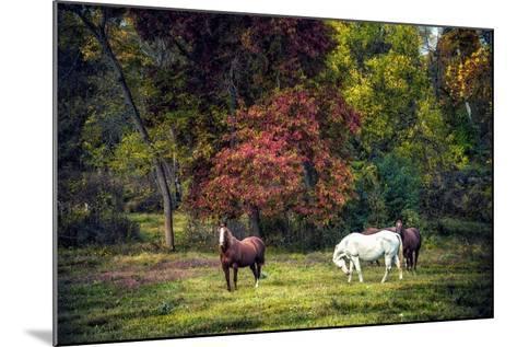 Horses in a Field at Fall in USA-Jody Miller-Mounted Photographic Print