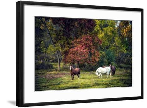 Horses in a Field at Fall in USA-Jody Miller-Framed Art Print