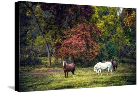 Horses in a Field at Fall in USA-Jody Miller-Stretched Canvas Print