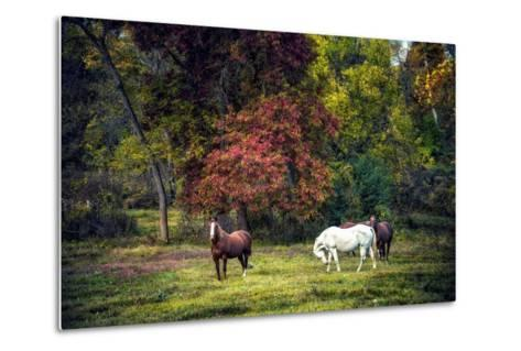 Horses in a Field at Fall in USA-Jody Miller-Metal Print
