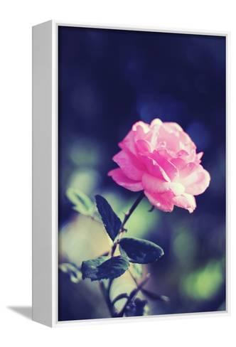 Pink Rose-Carolina Hernández-Framed Canvas Print