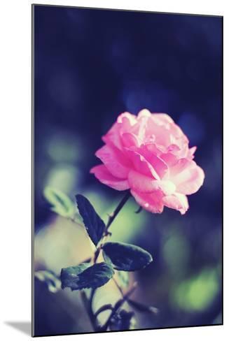 Pink Rose-Carolina Hernández-Mounted Photographic Print