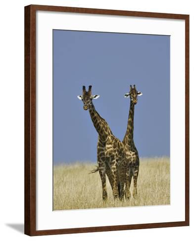 Pair of Masai Giraffes (Giraffa Camelopardalis Tippelskirchi), Masai Mara Game Reserve, Kenya-Adam Jones-Framed Art Print