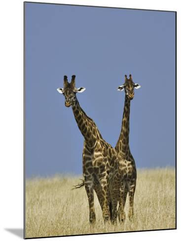 Pair of Masai Giraffes (Giraffa Camelopardalis Tippelskirchi), Masai Mara Game Reserve, Kenya-Adam Jones-Mounted Photographic Print