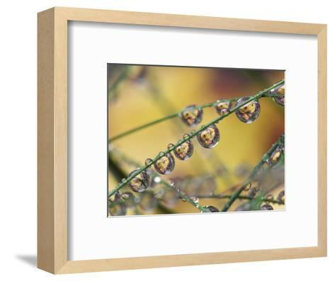 Autumn Leaves Reflected in Raindrops on Blades of Grass, Acadia National Park, Me-Adam Jones-Framed Art Print