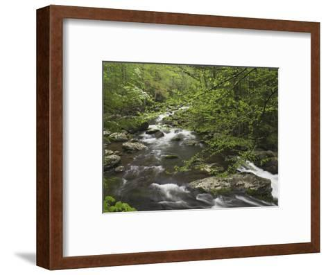 Mountain Stream in Early Spring, Great Smoky Mountains National Park, Tennessee-Adam Jones-Framed Art Print