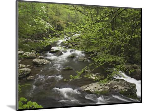 Mountain Stream in Early Spring, Great Smoky Mountains National Park, Tennessee-Adam Jones-Mounted Photographic Print