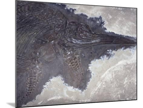 Ichthyosaur Fossil - Fish Lizard (Stenopterygius Quadricissus) Jurassic Period 185 M.Y.A Germany-Ken Lucas-Mounted Photographic Print