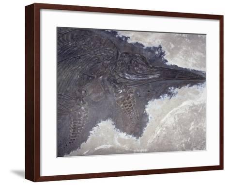 Ichthyosaur Fossil - Fish Lizard (Stenopterygius Quadricissus) Jurassic Period 185 M.Y.A Germany-Ken Lucas-Framed Art Print