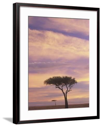 Acacia Trees Silhouetted at Twilight on the Savanna, Masai Mara Game Refuge, Kenya, Africa-Adam Jones-Framed Art Print