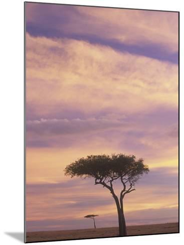 Acacia Trees Silhouetted at Twilight on the Savanna, Masai Mara Game Refuge, Kenya, Africa-Adam Jones-Mounted Photographic Print