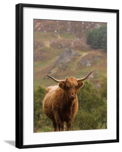 Scottish Highland Cow-Wayne Hutchinson-Framed Art Print