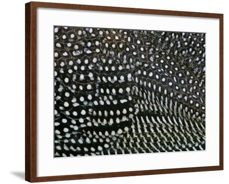 Helmeted Guinea Fowl Plumage Detail, Numida Meleagris, Ngorongoro Crater, Tanzania-Arthur Morris-Framed Art Print