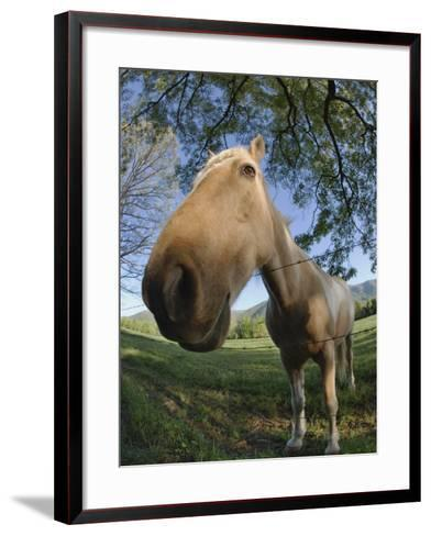 Fisheye View of Horse Looking over Fence, Cades Cove, Great Smoky Mountains N.P. TN-Adam Jones-Framed Art Print