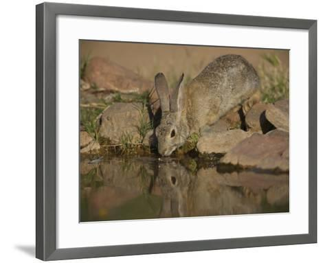 Desert Cottontail-Jack Michanowski-Framed Art Print