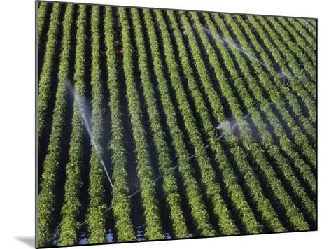 Aerial View of Irrigated Potato Furrows, Eastern Idaho, USA-Marli Miller-Mounted Photographic Print