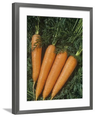 Carrots are Vegetables with a Tap Root (Daucus Carota)-Wally Eberhart-Framed Art Print