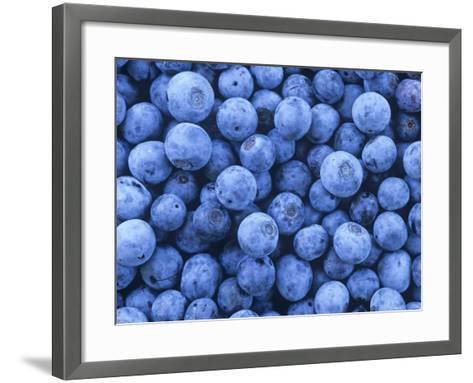Blueberries, Vaccinium Corymbosum-David Sieren-Framed Art Print