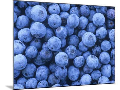 Blueberries, Vaccinium Corymbosum-David Sieren-Mounted Photographic Print