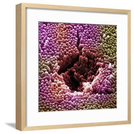 Bacteria from Polluted Storm Water-David Phillips-Framed Art Print