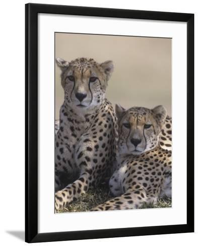Two Male Cheetahs (Acinonyx Jubatus), Kenya, Africa-Tom Walker-Framed Art Print