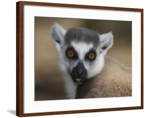 Ring-Tailed Lemur Face (Lemur Catta), Madagascar-Christopher Crowley-Framed Art Print