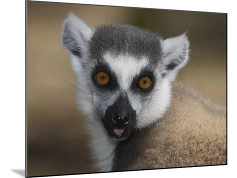 Ring-Tailed Lemur Face (Lemur Catta), Madagascar-Christopher Crowley-Mounted Photographic Print