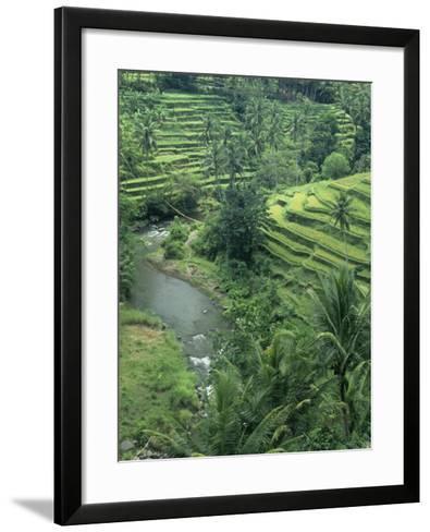 Terraced Rice Paddies (Oryza Sativa), Java, Indonesia-Tim Hauf-Framed Art Print